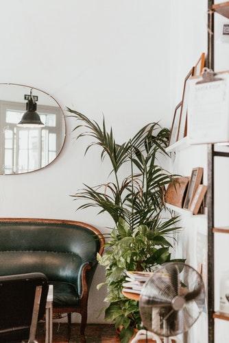 Salon, déco, canapé cuir, plante verte, miroir